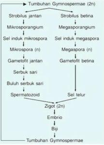 Reproduksi Gymnospermae