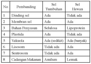 Contoh Soal Dan Pembahasan Organel Sel Hewan Dan Tumbuhan Fiqihislam